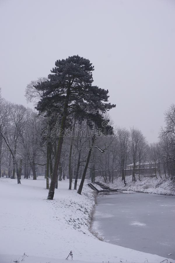 Winter in Park 8 royalty free stock image