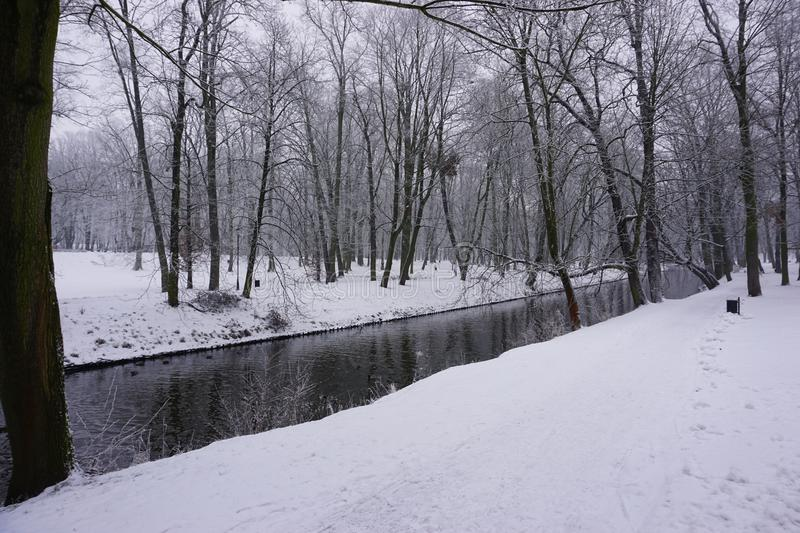 Winter in Park 3 royalty free stock image