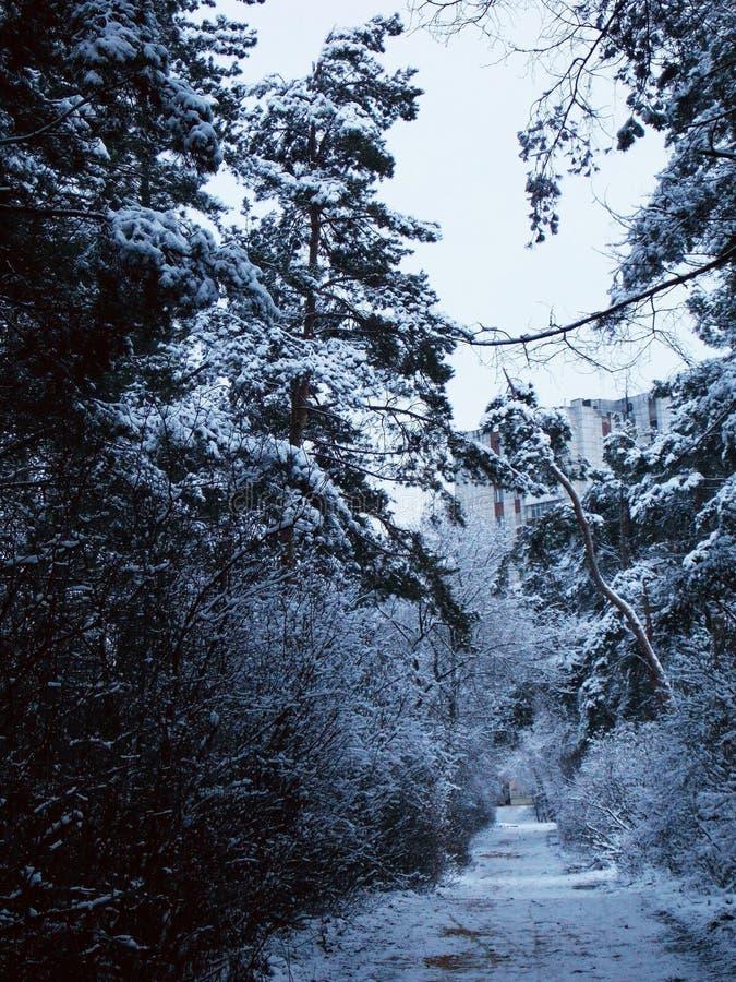 Winter park Tanais Voronezh stock image
