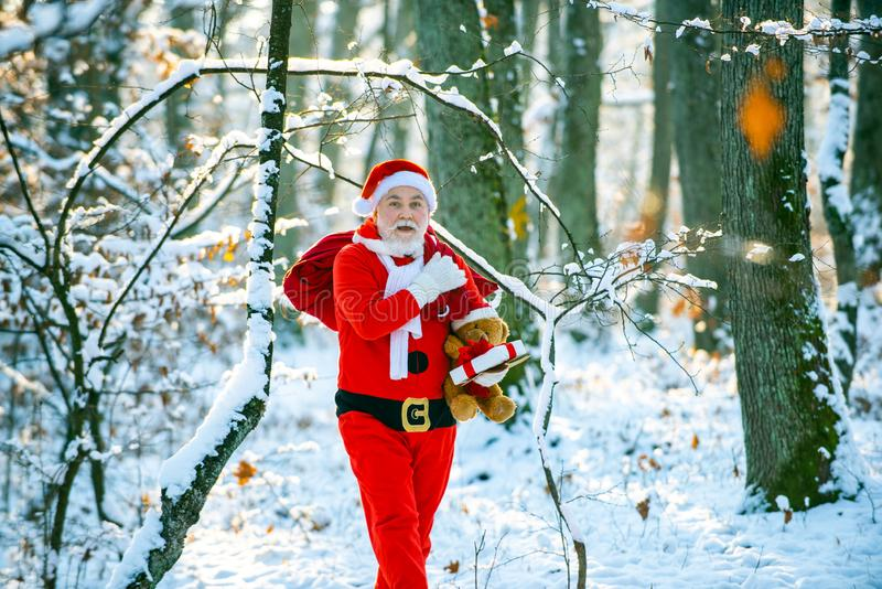 Winter park trees covered with snow. Santa Claus with bag walking in winter. Santa Claus pulling huge bag of gifts on stock image