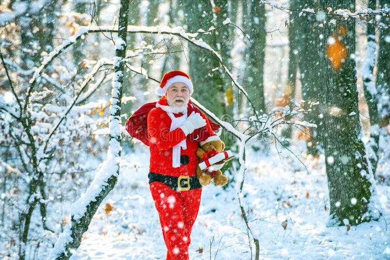 Winter park trees covered with snow. Santa Claus with bag walking in winter. Santa Claus pulling huge bag of gifts on stock images