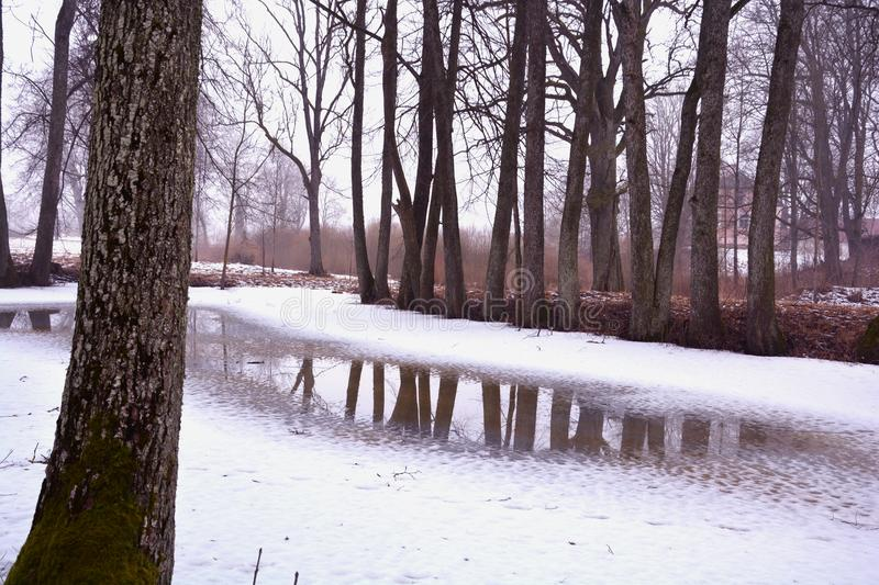 Winter park with trees and pond with melt water. Winter park landscape with old trees and pond with melt water royalty free stock photography