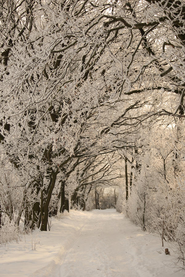 Free Winter Path Stock Image - 16352011