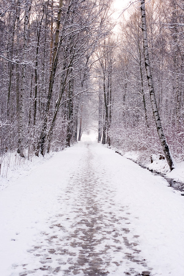 Free Winter Path Stock Photography - 3687452