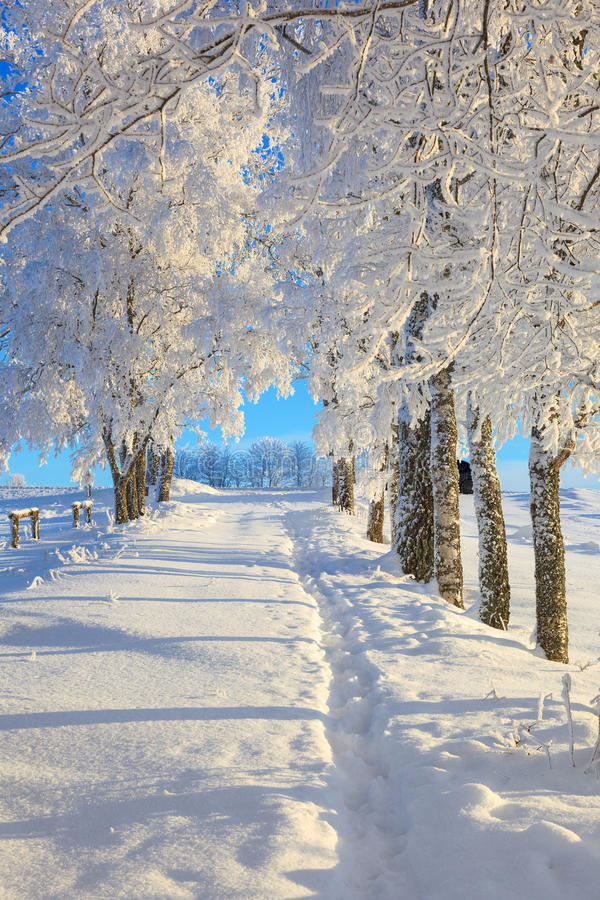 Winter path royalty free stock photo