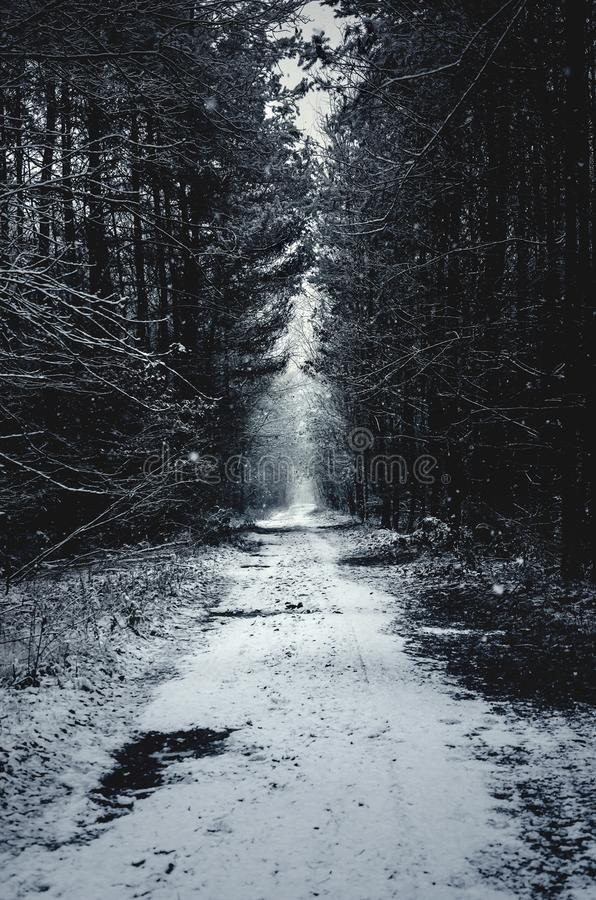Winter path in the snowy forest. Dark, moody and scary winter path in the snowy forest stock photography