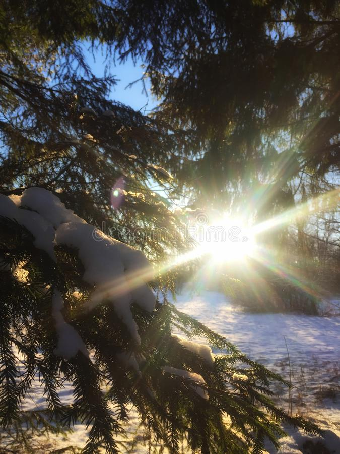 Winter in Pavlovsk, Leningrad-oblast kalt und sehr nett lizenzfreies stockbild