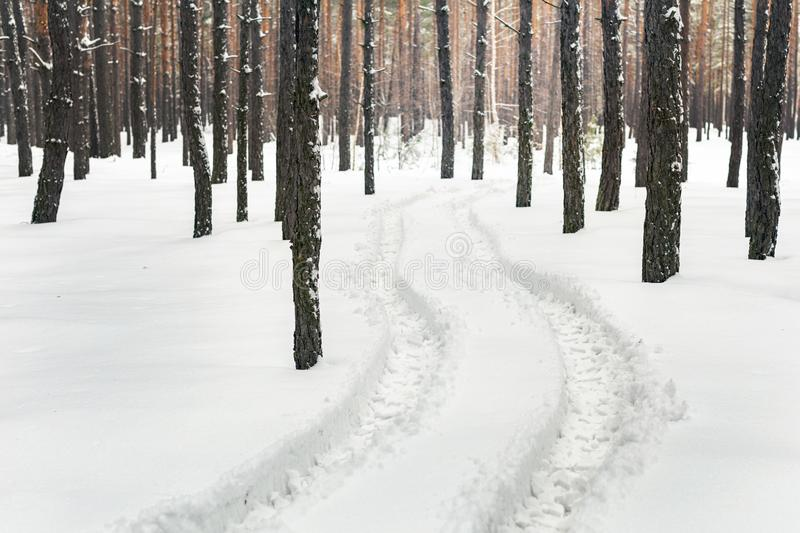 Winter pine forest landscape with rut in deep snow between trees . Car or ATV traces in after snowfall stock photo