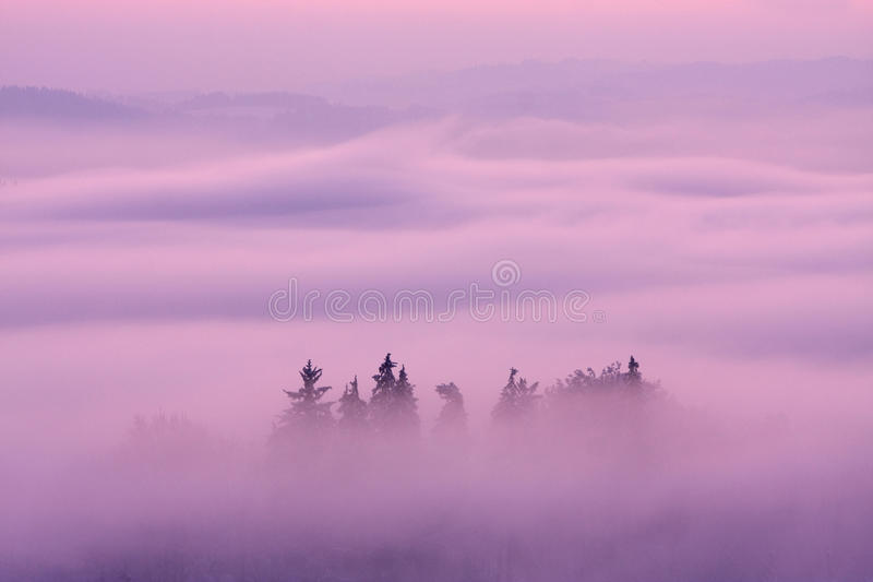 Winter pink landscape. Beautiful winter landscape, picture taken during twilight conditions stock photos