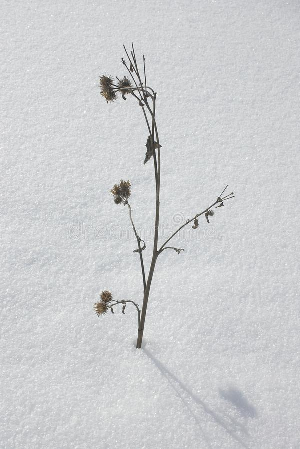 Winter plant, flower stock photography