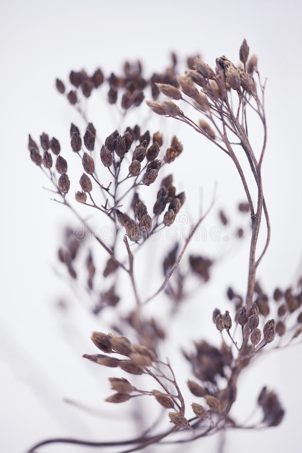Winter Plant Silhouette stock photos