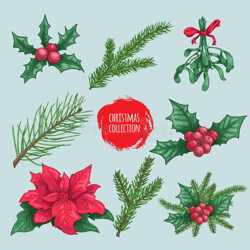 Winter Plants Elements And Compositions Holly Berries Mistletoe Poinsettia Fir Branch Pine Branches Hand Drawn Sketch Style Stock Vector Illustration Of Flower Holiday 183373471