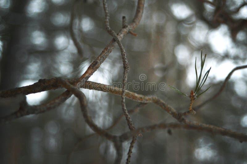 Winter plants royalty free stock photo
