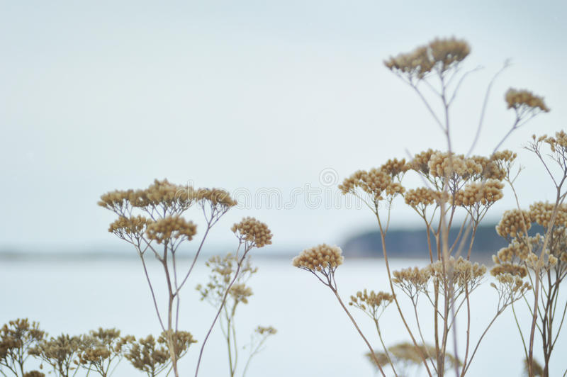 Winter plants royalty free stock photography