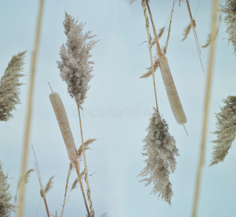 Winter plants stock images