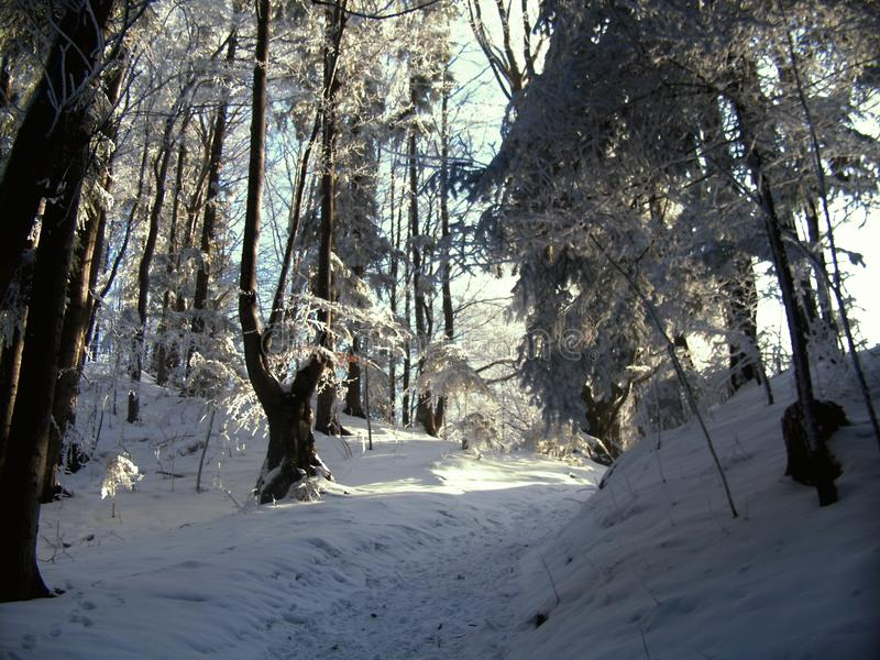 Winter in poland royalty free stock photo