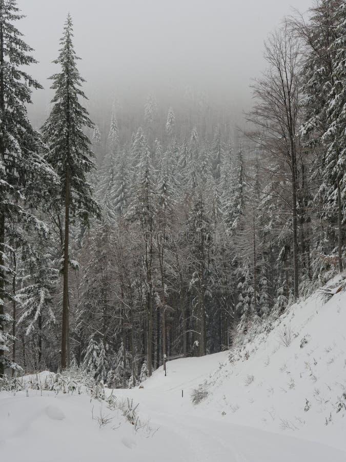 Winter in polish  mountain stock image