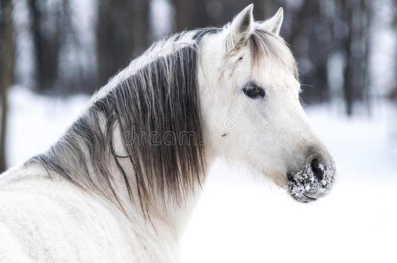Winter pony royalty free stock images