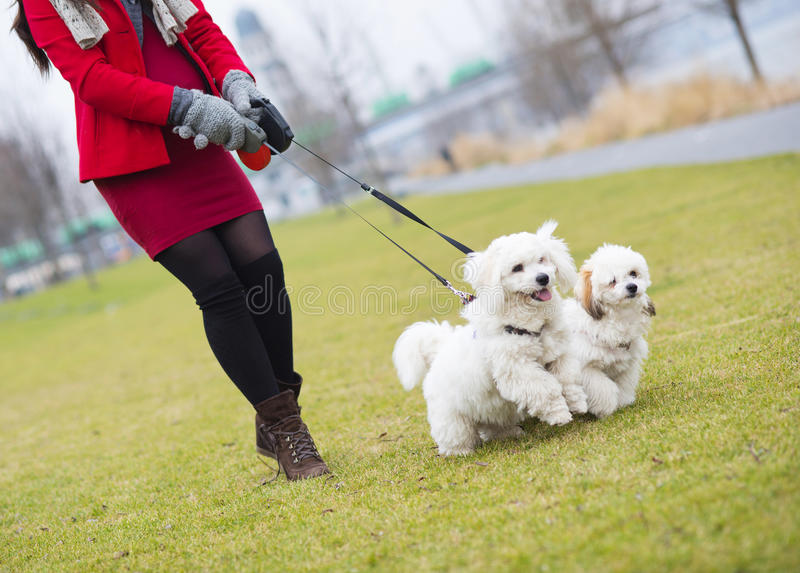 Winter portrait of pregnant woman walking dogs royalty free stock photos