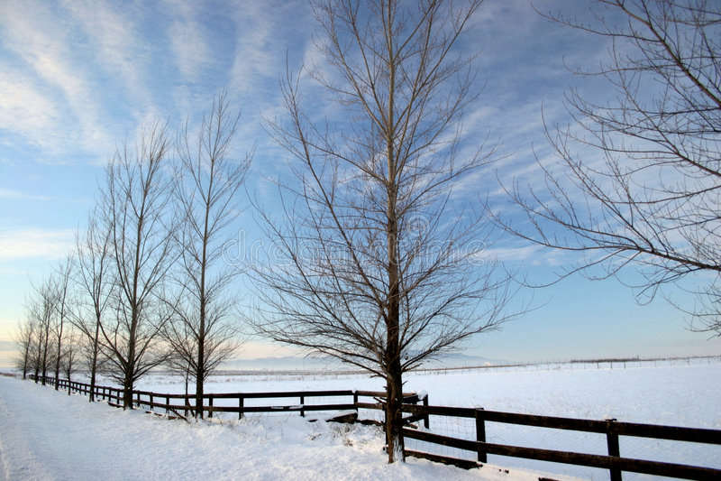 Winter on the Prairie stock photo