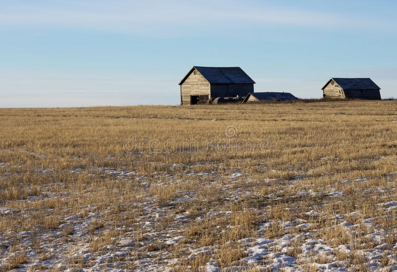 Winter prairie harvested field with abandoned barns on horizon. Snow on ground with abandoned farm buildings on the horizon all against a blue clear sky royalty free stock photo