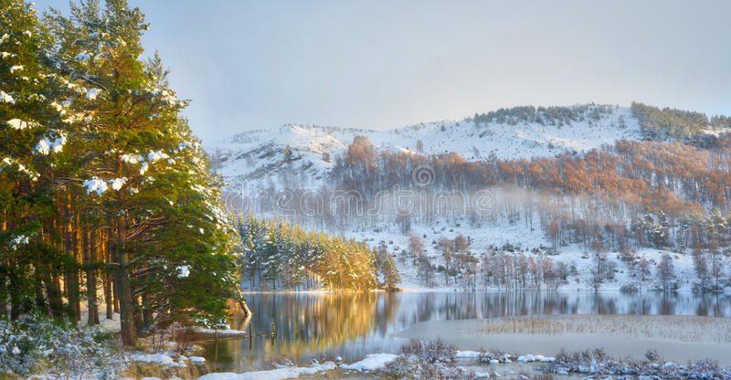 Winter reflection with snow, pine trees and sunshine. Pine trees reflecting in the calm waters of a scottish loch. Snow covered mountains in the background stock photo
