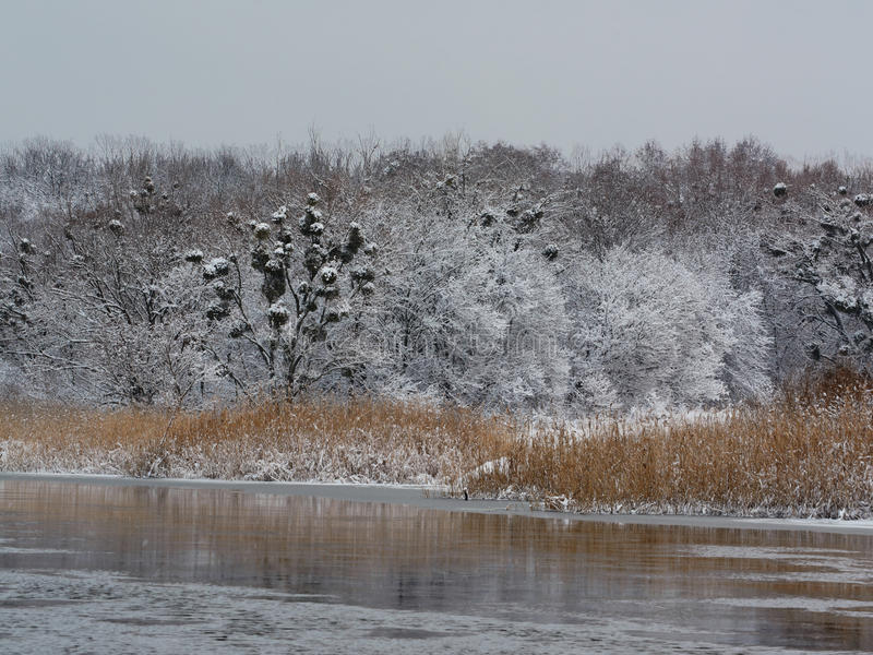 Winter river in morning. Beautiful winters morning landscape with the river stock images