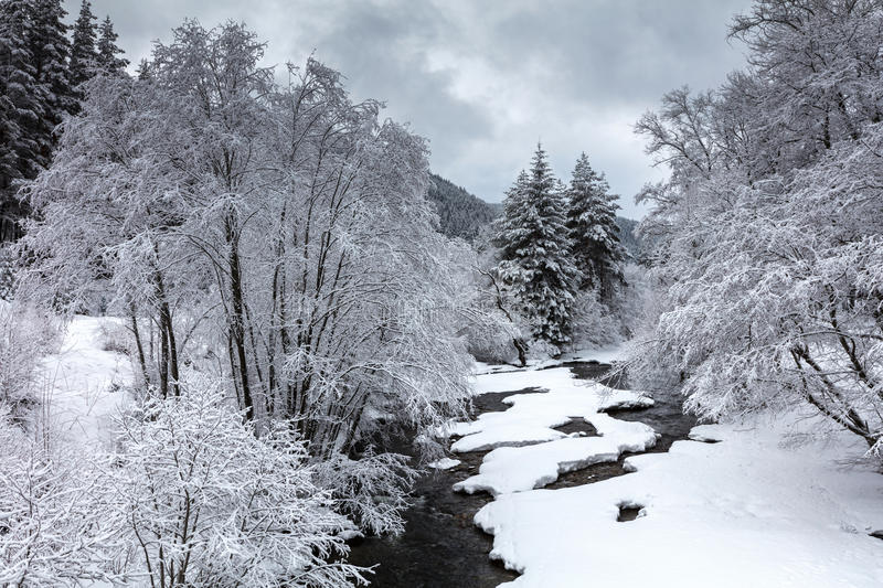 Winter River. Stream covered with snow in the winter forest stock photography