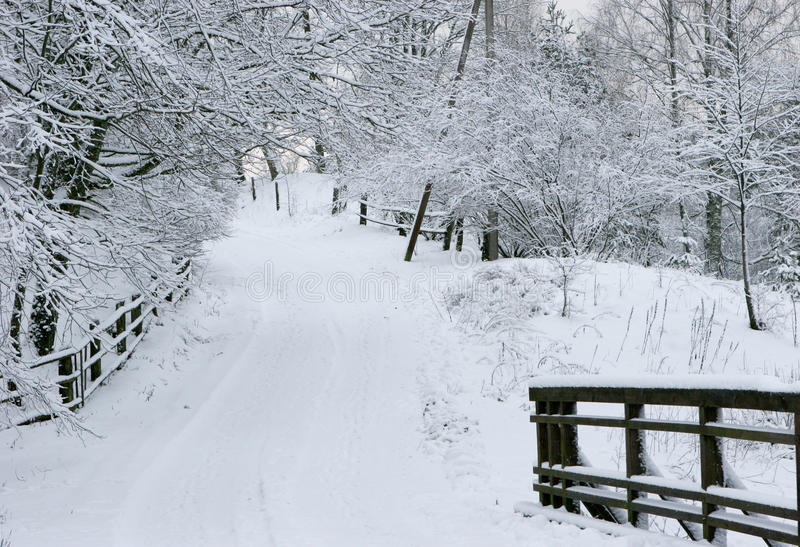Download Winter road stock photo. Image of branch, white, road - 11942278