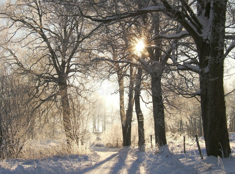 Download Winter road stock photo. Image of white, winter, trees - 464852