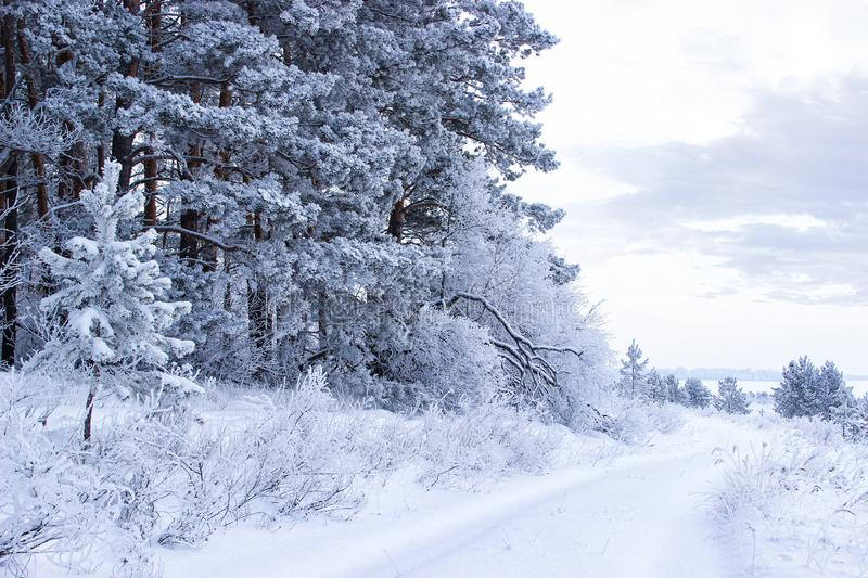Winter road along a snowy forest. Winter road along a snowy forest, cold season, frosts in the forest stock image