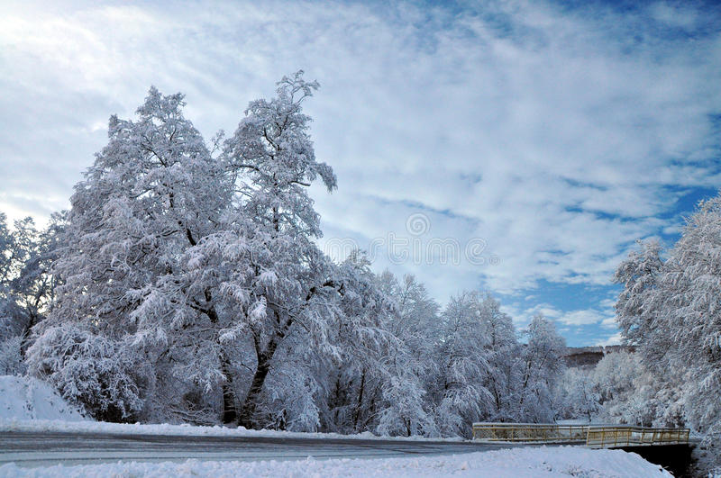 Winter road and forozen trees stock photo