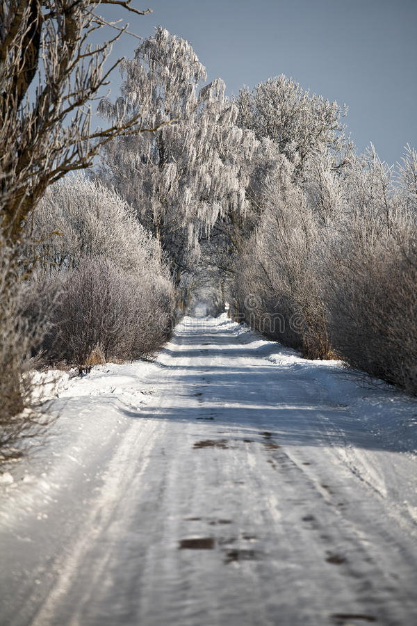 Download Winter Road With Frosted Trees And Rime Stock Image - Image: 12801865