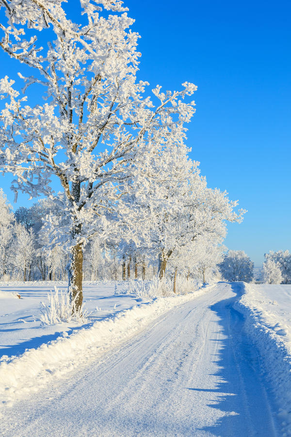 Winter road with frosty trees stock images