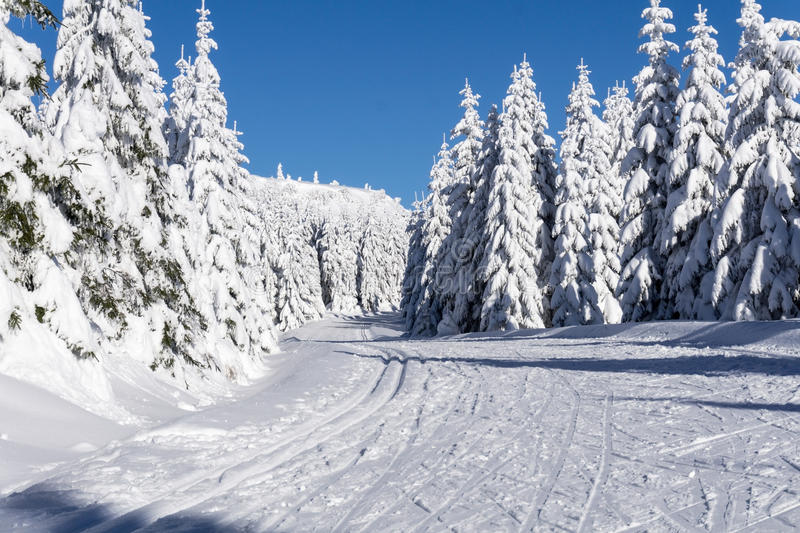 Winter road in mountains. Groomed ski trails for cross-country royalty free stock images