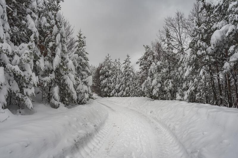 Winter road in the mountains surrounded by snowy trees.  royalty free stock images