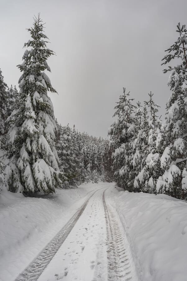 Winter road in the mountains surrounded by snowy trees.  stock image