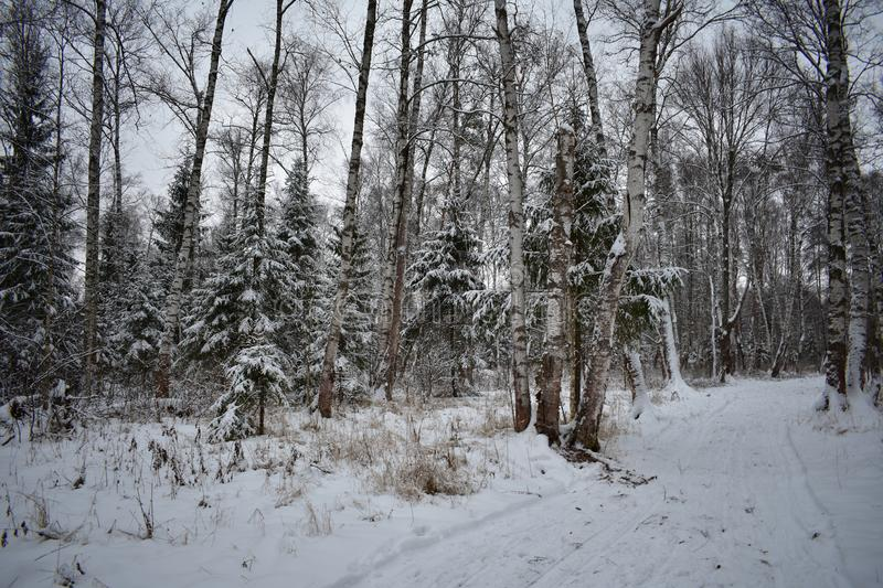 Winter road. On the one hand there is a wood and some birches near a roadside royalty free stock image