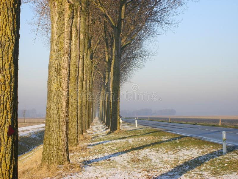 Winter road in rural Dutch province Flevoland. With trees and frozen grass royalty free stock photography