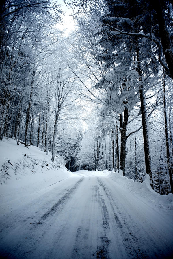 Download Winter road stock image. Image of peaceful, snow, leaf - 33394601