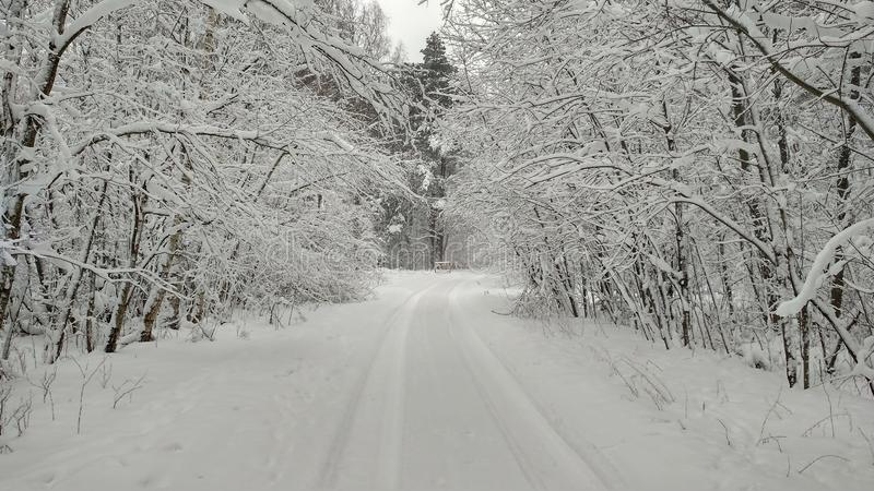 Winter road in a snowy forest. Whire, white, trees, outdoor, landscope, cold, frost, background, ice, wood, scenic, weather, season, travel stock photography