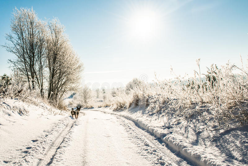 Winter road in sunny day stock photography