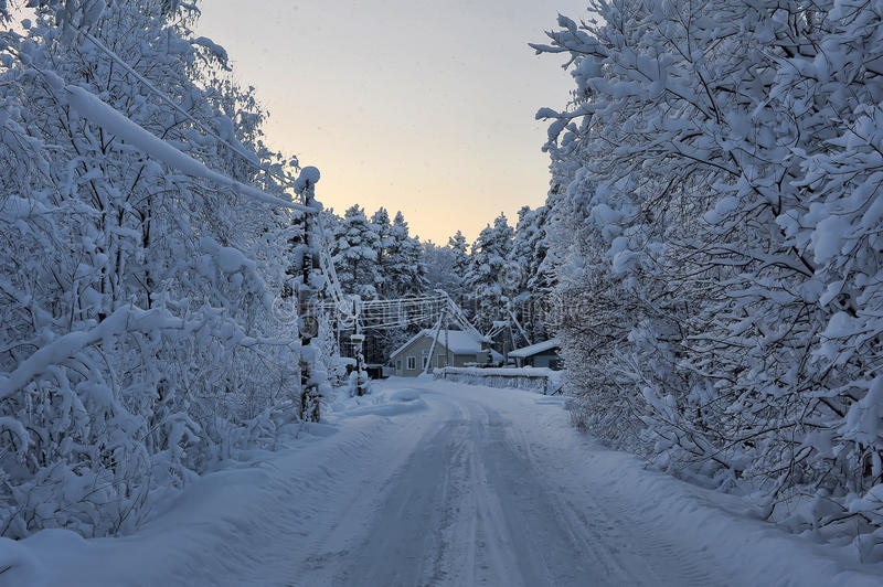 Winter road surrounded by trees stock photo