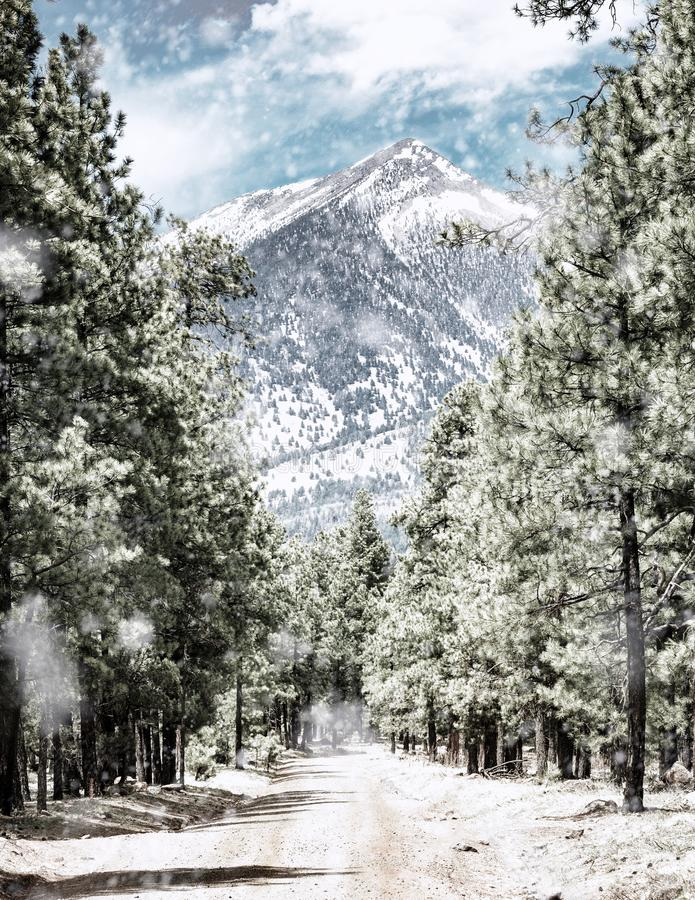 Free Winter Road To Humphrey`s Peak In Flagstaff Arizona Stock Images - 105822444