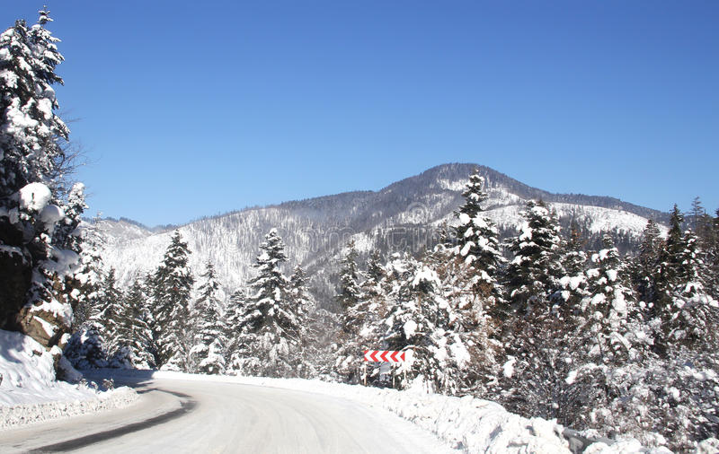 Winter road. To mountain, snow with fir-tree stock photography