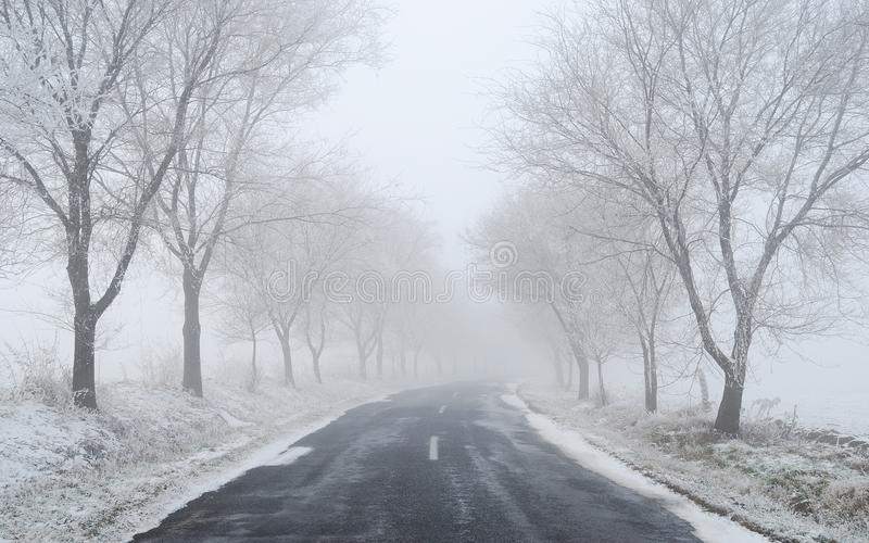 Foggy / frosty winter road with trees royalty free stock image