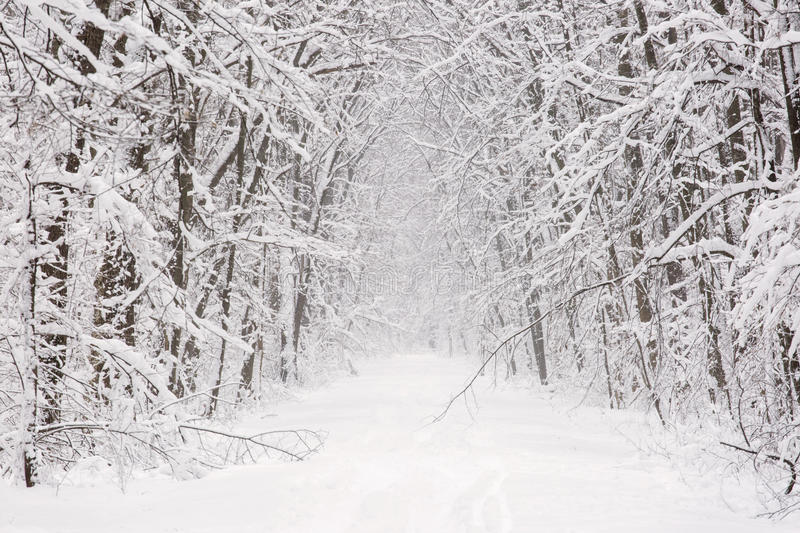 Winter road with trees and snow white road. royalty free stock photos