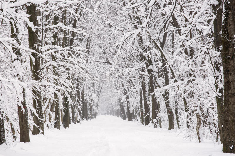 Winter road with trees and snow white road. stock image