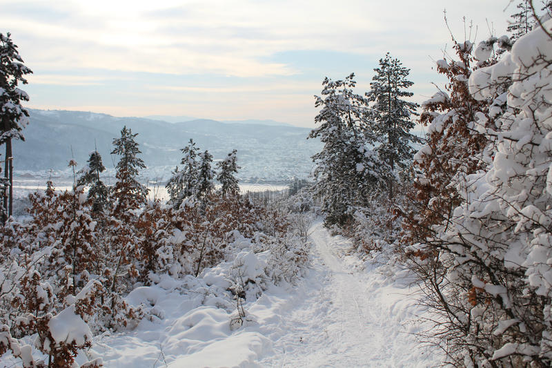 Winter road through the woods royalty free stock photos