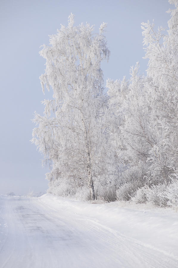 Winter russian forest snow road. Winter country road with forest on the side royalty free stock photo
